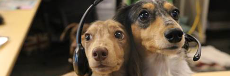 Two dogs man the phones at Trupanion's Seattle office