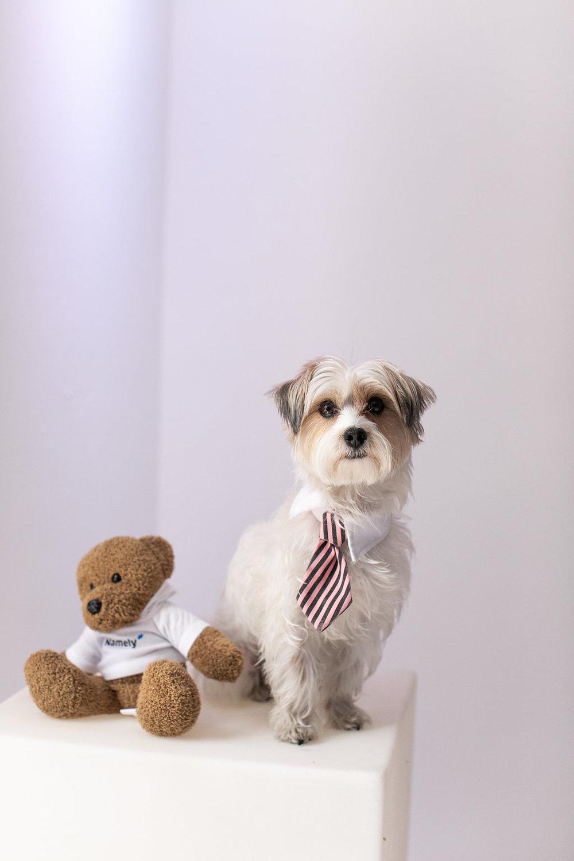 A dog poses with a NamelyBear